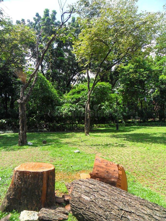 лесохозяйство стоковые изображения