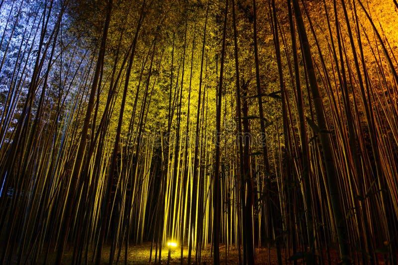 Естественная бамбуковая предпосылка загоренная красочными светами на ноче во время фестиваля фонарика Arashiyama стоковое фото