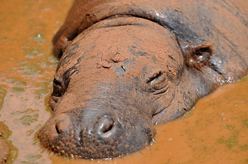 Естественная ванна грязи стоковое изображение rf