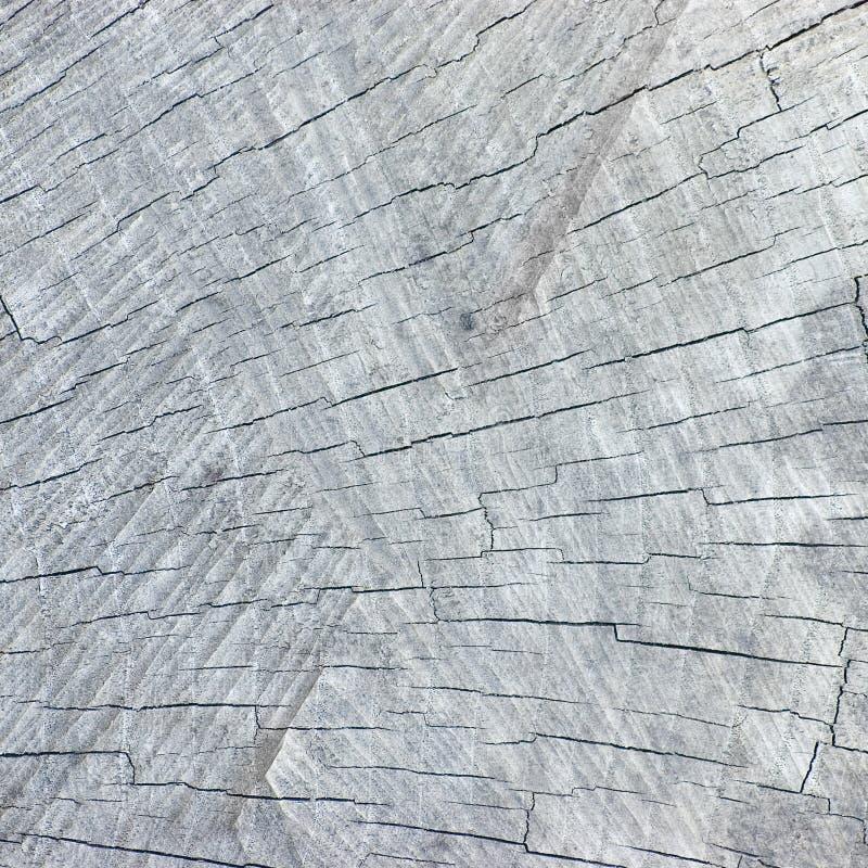 Естественная выдержанная треснутая серая текстура отрезка пня дерева, большая детальная предпосылка текстурированный крупный план стоковая фотография rf