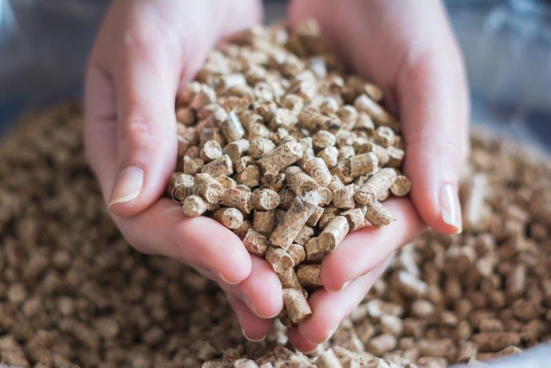Естественная деревянная лепешка для нагревать в руках женщин, био топливо стоковые изображения rf