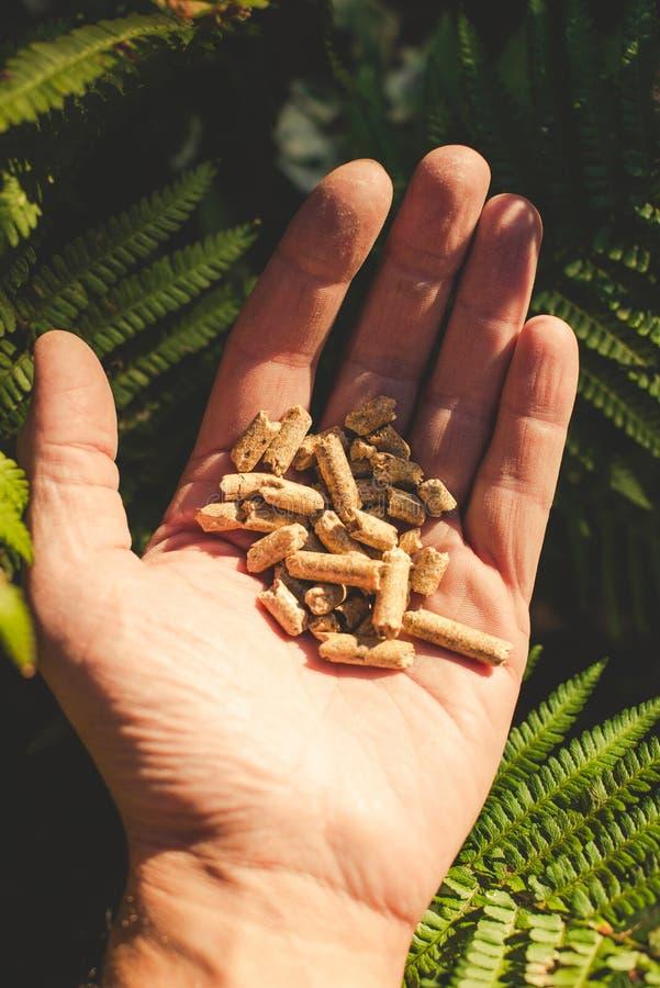 Естественная деревянная лепешка стоковое фото