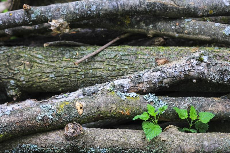 Естественная деревянная текстура стоковое изображение