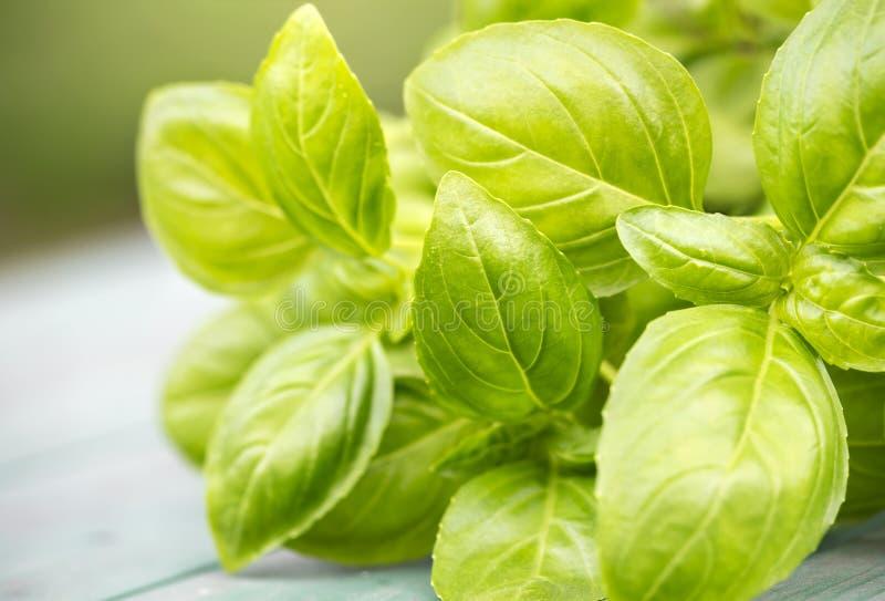 Естественная еда травы и овоща, свежие зеленые листья базилика стоковое изображение