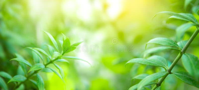 Естественная зеленая предпосылка стоковая фотография rf