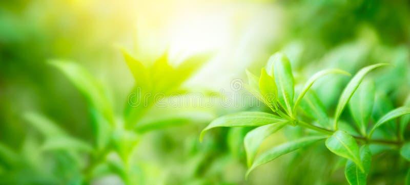 Естественная зеленая предпосылка стоковое изображение rf