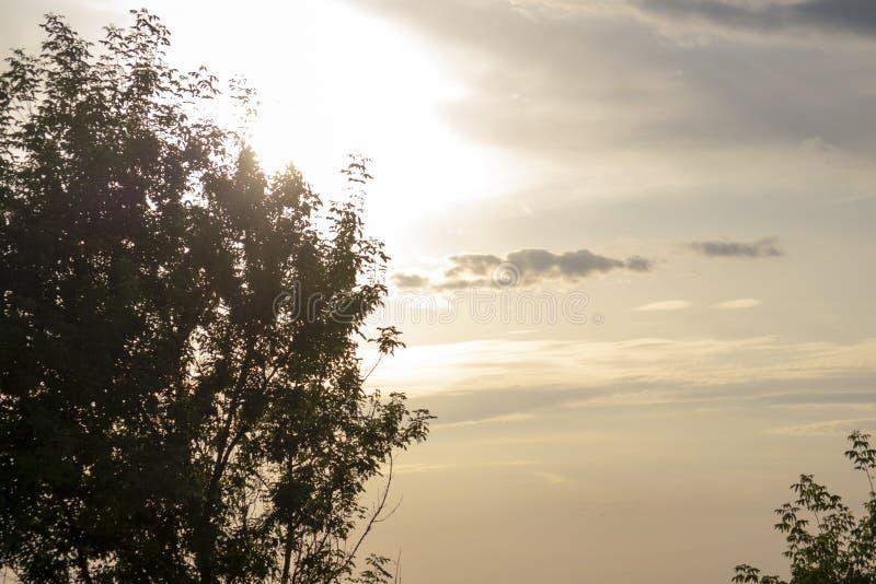 Естественная зеленая трава в парке Увиденный в конце вверх по взгляду с высокими деревьями в предпосылке с солнечным светом Фокус стоковое изображение rf