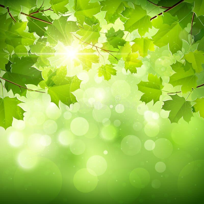 Естественная зеленая предпосылка иллюстрация вектора