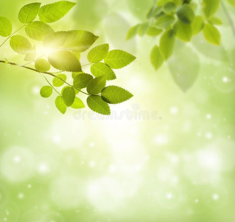 Естественная зеленая предпосылка стоковая фотография