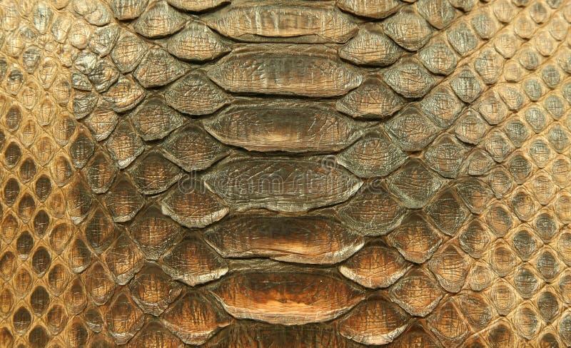 естественная кожа питона стоковые фотографии rf