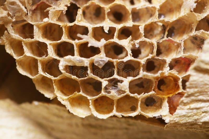 Естественная крапивница пчелы стоковое изображение
