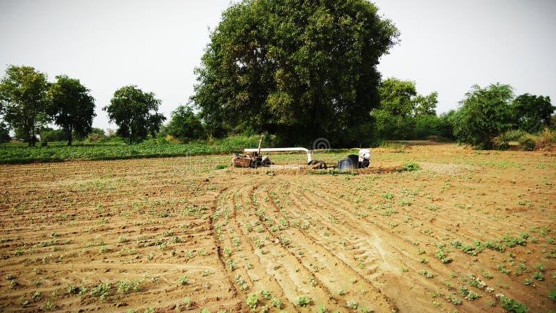 Естественная красота Индии и крутых ферм и животных фермеры стоковое изображение rf