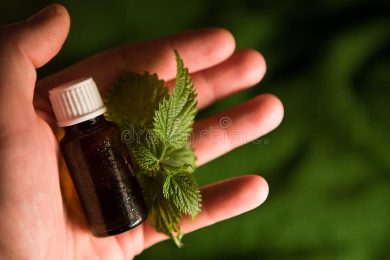 Естественная медицина - выдержка крапивы стоковые фотографии rf