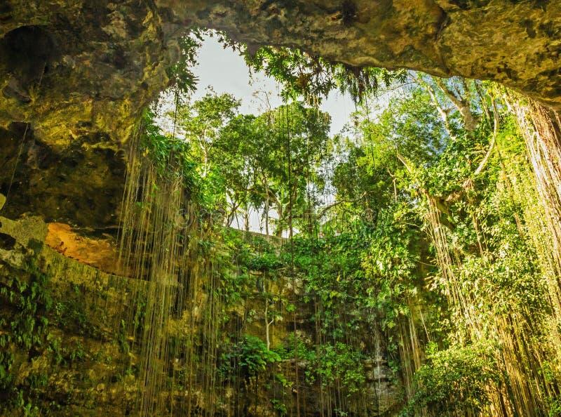 Естественная пещера с живописными лианами, Мексика стоковые изображения rf