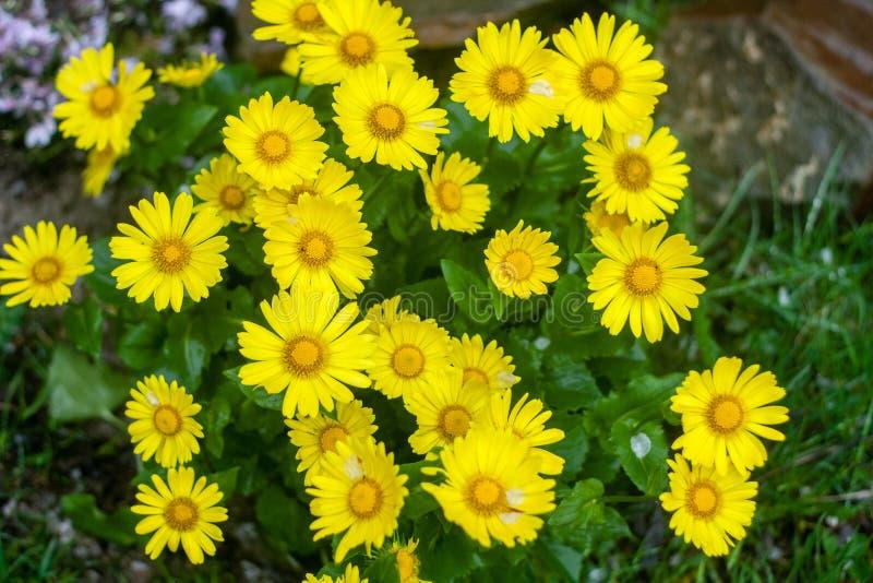 Естественная предпосылка лета с желтыми цветками стоковое изображение