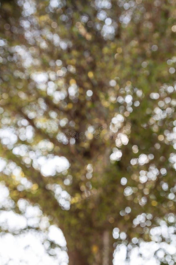 Естественная предпосылка, из дерева фокуса или bokeh стоковая фотография