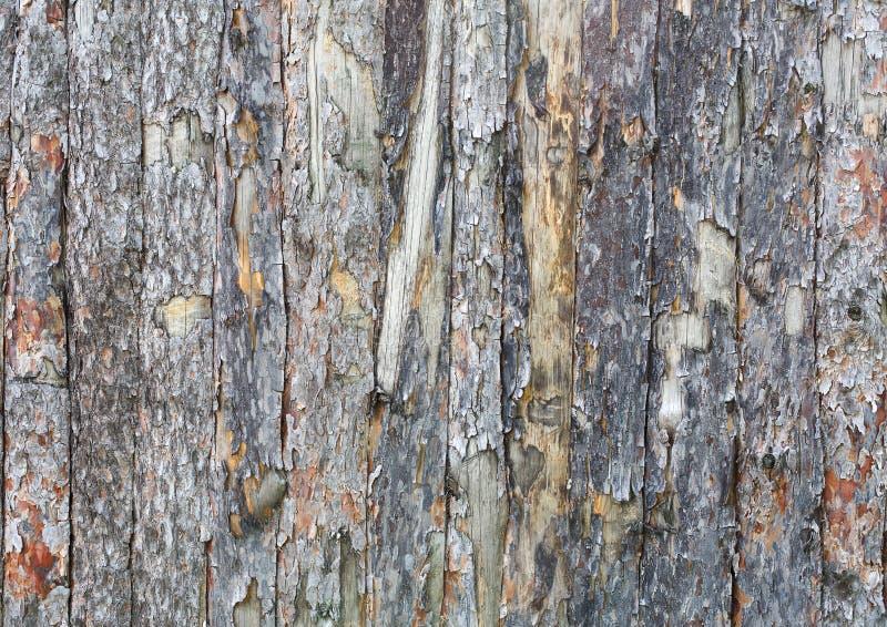 Естественная предпосылка текстуры планки коры дерева стоковое изображение