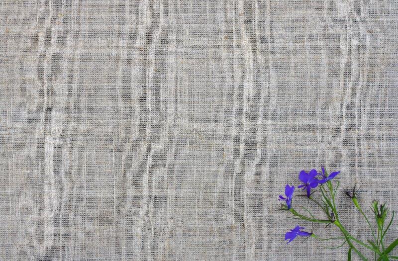 Естественная текстура с малым букетом фиолетовых цветков Предпосылка естественной ткани грубая стоковая фотография