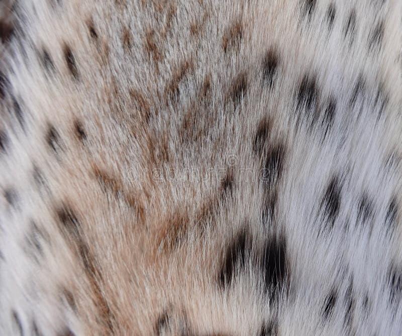 Естественное мех рыся стоковое фото