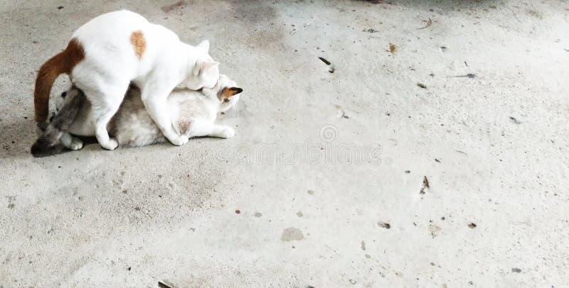 Естественное поведение кота стоковое изображение