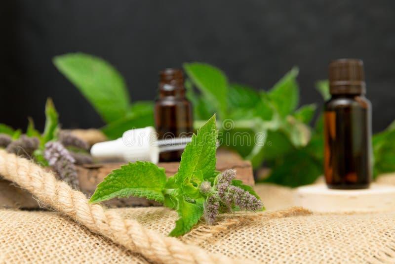 Естественное эфирное масло пипермента в стеклянной бутылке с листьями свежей мяты на деревянной предпосылке стоковое изображение