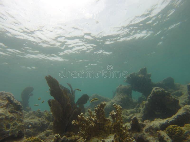 Естественное Key West стоковые изображения rf