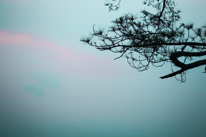 Естественные ветви в туманном небе и хорошем телезрителе стоковые изображения