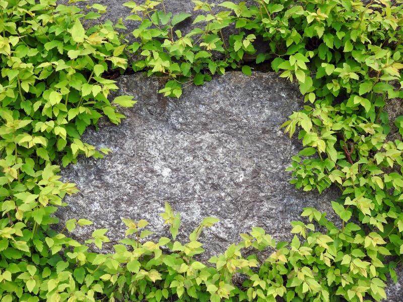 Естественные заводы камня и весны, Литва стоковое фото rf
