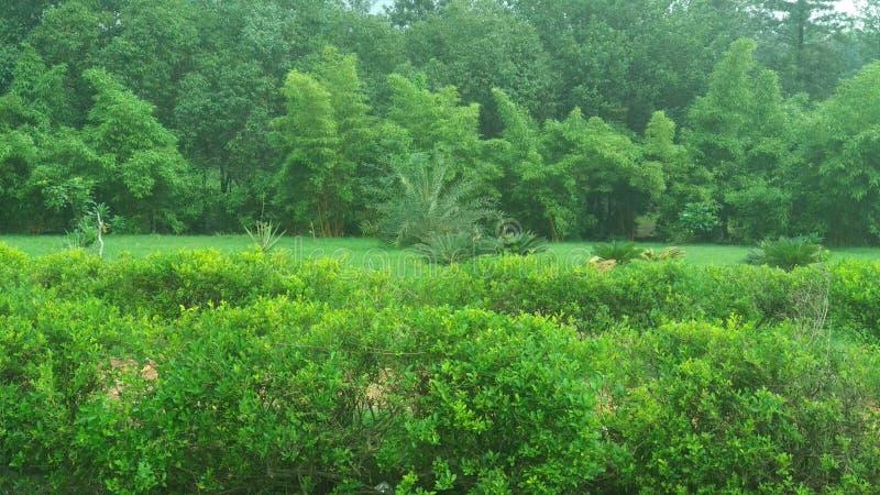 Естественные зеленые лист сада, дерево, заводы, эпидермис лист, который непрерывн с эпидермисом стержня стоковая фотография