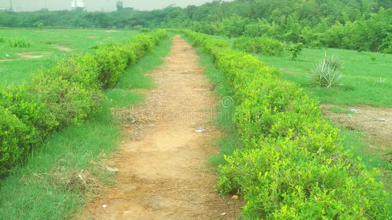 Естественные зеленые лист сада, дерево, заводы, эпидермис лист, который непрерывн с эпидермисом стержня стоковые изображения