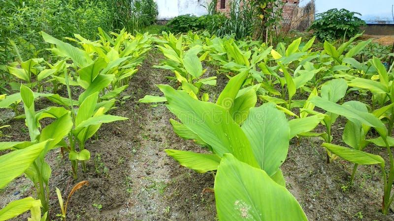 Естественные зеленые лист сада, дерево, заводы, эпидермис лист, который непрерывн с эпидермисом стержня стоковое фото