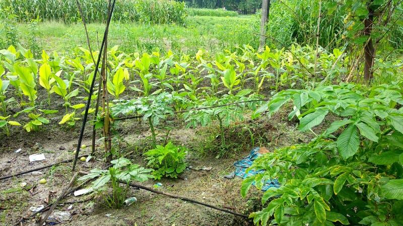 Естественные зеленые лист сада, дерево, заводы, эпидермис лист, который непрерывн с эпидермисом стержня стоковые фотографии rf