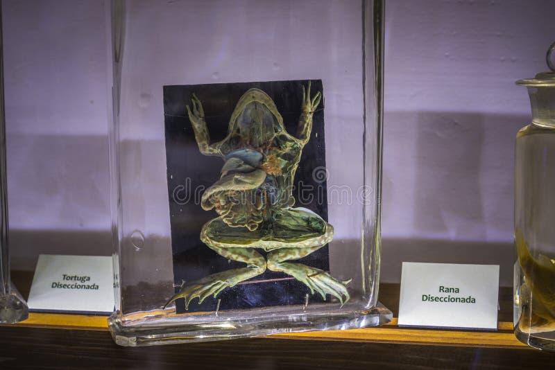 Естественные науки, войденный музей Вальядолид Испания стоковая фотография