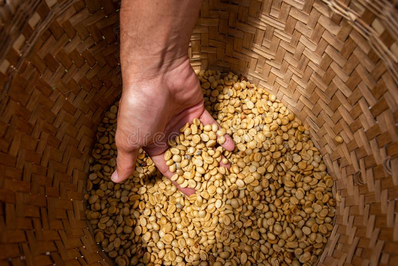 Естественные органические зеленые кофейные зерна стоковые изображения