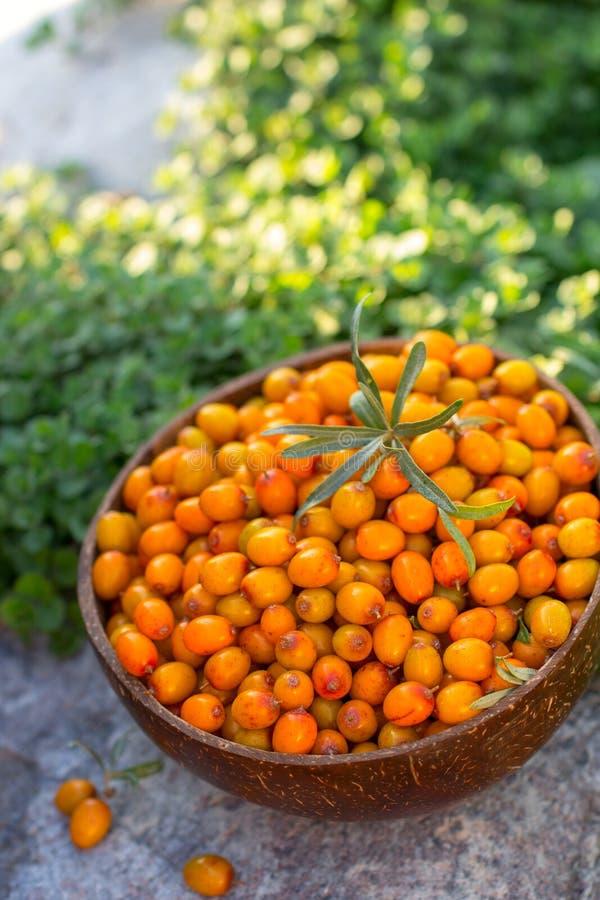 Естественные органические зрелые ягоды крушины моря в деревянном шаре на камне летом стоковые изображения