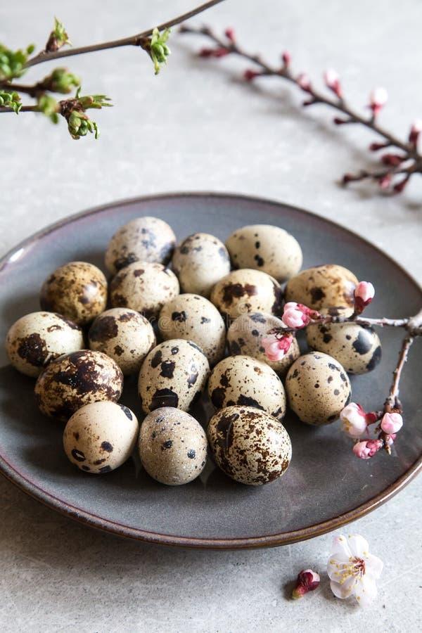 Естественные органические свежие яйца триперсток Диета протеина стоковые фото
