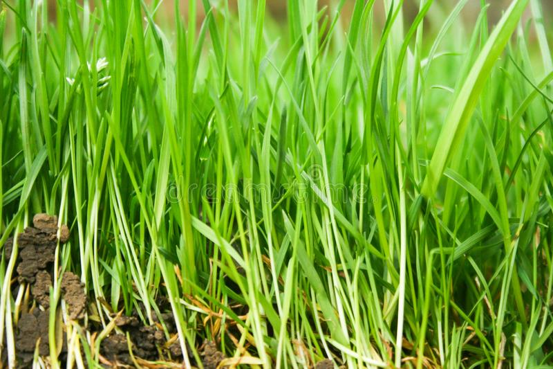 Естественные предпосылки с зеленой травой стоковое фото