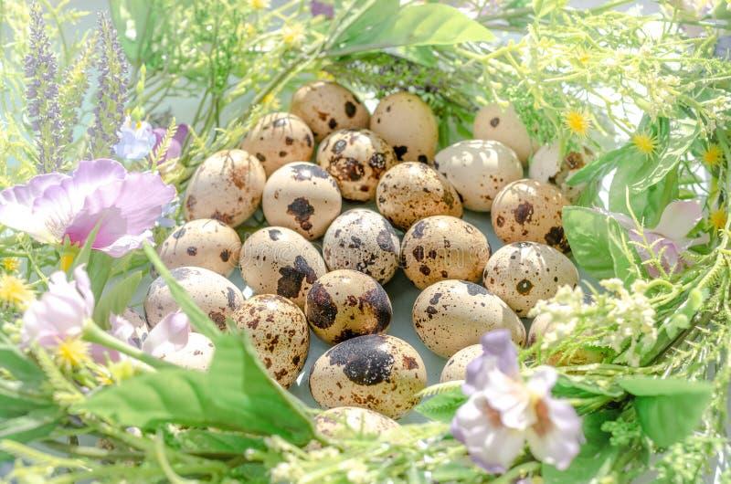 Естественные яйца триперсток во флористическом гнезде в солнечном св стоковое фото