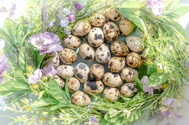 Естественные яйца триперсток во флористическом гнезде в солнечном свете на голубой предпосылке Счастливая пасха, весна, здоровая  стоковое фото rf