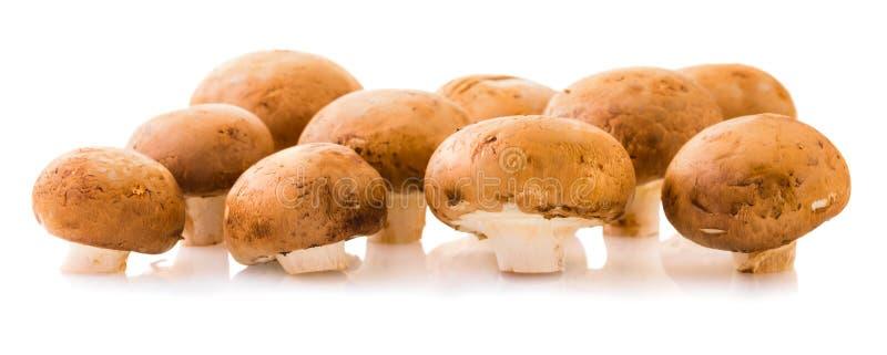 Естественные champignons грибов стоковые фото
