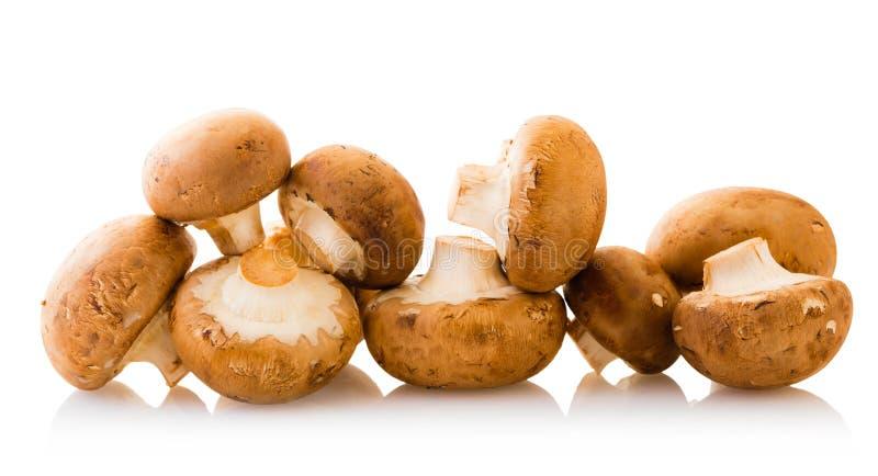 Естественные champignons грибов стоковое изображение