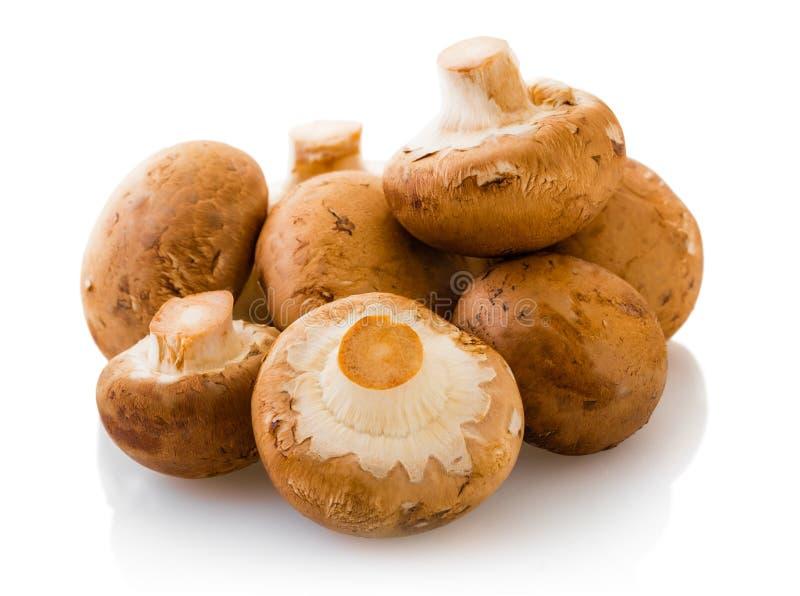 Естественные champignons грибов стоковые фотографии rf