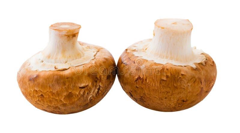 Естественные champignons грибов стоковая фотография