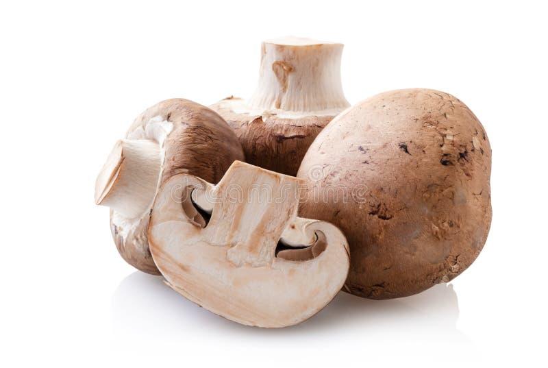 Естественные champignons грибов стоковые изображения rf