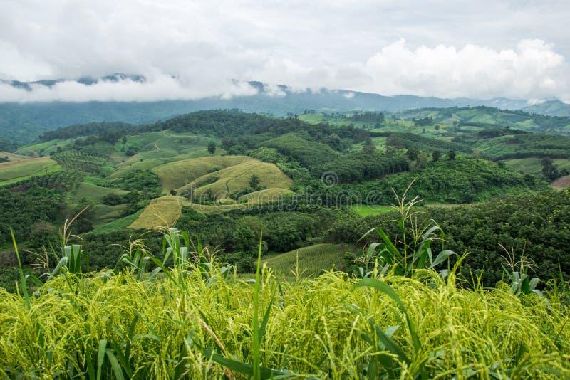 Естественный ландшафт горы Phuchefah стоковые фотографии rf