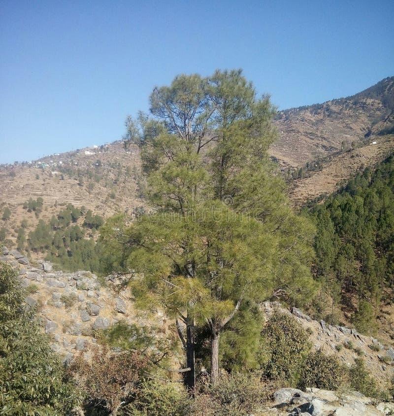 Естественный взгляд стоковое фото rf