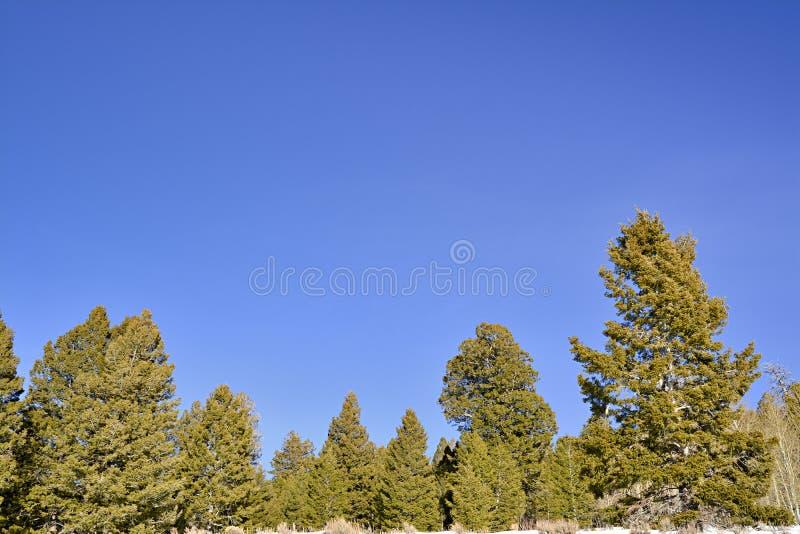 Download Естественный лес в глуши Айдахо Стоковое Изображение - изображение насчитывающей природа, вертикально: 40587813