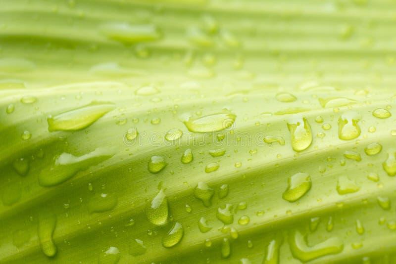 Естественный зеленый цвет с падениями воды стоковое фото