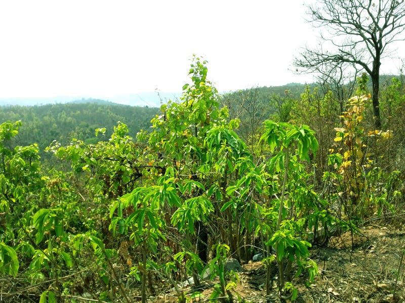 Естественный красивый пейзаж скалистой горы стоковое фото rf