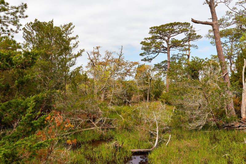 Естественный пейзаж в национальном лесе Croatan Северной Каролины стоковое фото